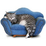 Аксессуары для котов