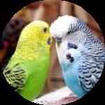 Все для птиц и попугаев