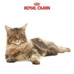 Сухой корм для кошек Royal Canin