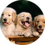 Зоотовары для собак