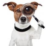 Засоби від гельмінтів для собак