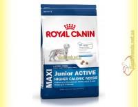 Купить Royal Canin Maxi Junior Active 4кг