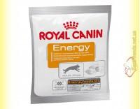 Купить Royal Canin Energy Лакомство для дополнительной энергии активных собак 50гр